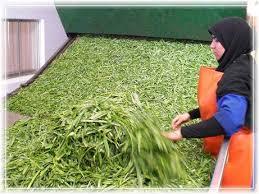 سبزیجات خشک