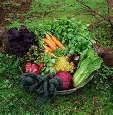 سبزی خشک ارگانیک شمال