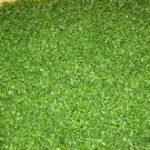 قیمت انواع سبزی خشک