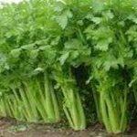 فروش سبزیجات شمال