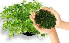 سبزیجات آهندار