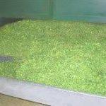 سبزی خشک بیجار